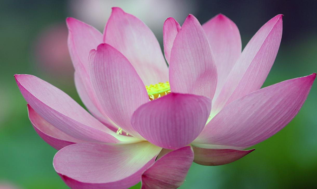 Bodite edinstvena roža – kako prenehati primerjati sebe z drugimi? (1. del)